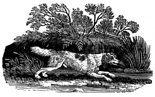 The Springer, or Cocker and Newfoundland Dog were first published by Bewick in his landmark book A General History of Quadrupeds (1790).